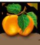Kajszibarack gyümölcslé 5L